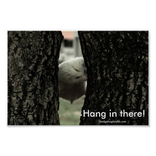 Hang in there! print