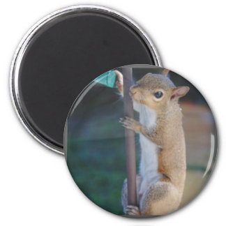 Hang in There Squirrel 2 Inch Round Magnet