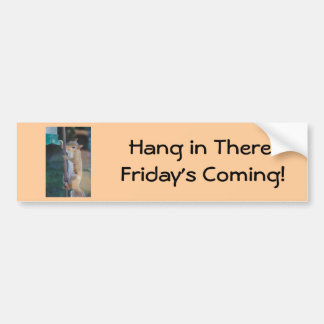 Hang in There Squirrel Car Bumper Sticker