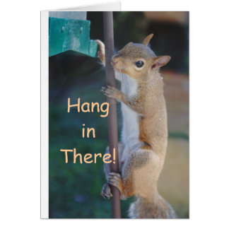 Hang in There Squirrel Cards