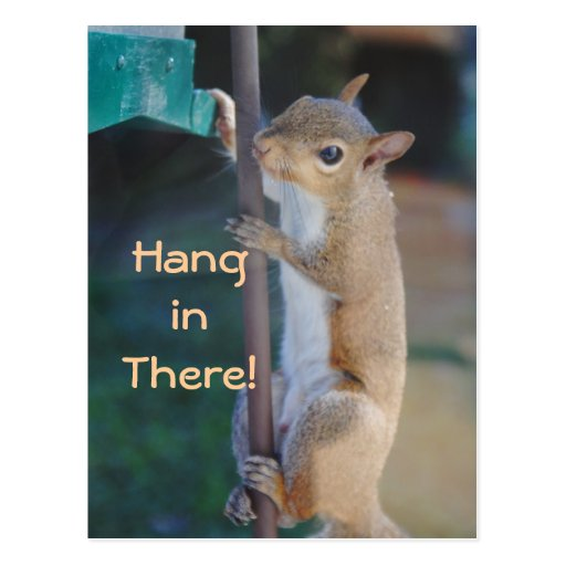 Hang in There Squirrel Postcard