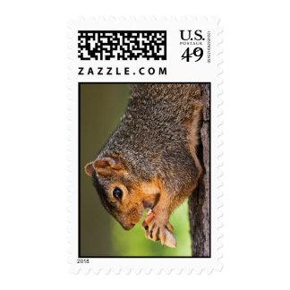 Hanging Around Stamps