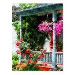 Hanging Baskets and Climbing Roses Postcards