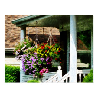Hanging Baskets Postcard