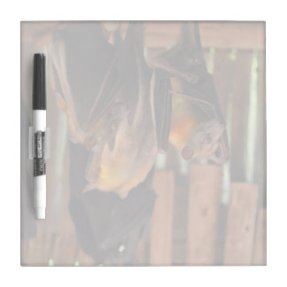hanging bats in house painting animals dry erase board