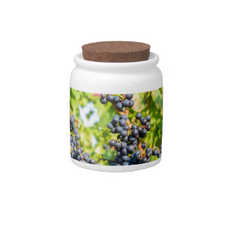 Hanging blue grape bunches in vineyard candy jar