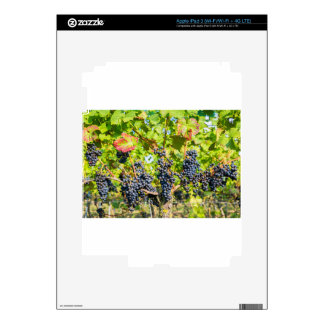 Hanging blue grape bunches in vineyard decals for iPad 3