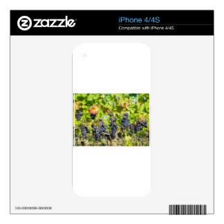 Hanging blue grape bunches in vineyard skin for the iPhone 4S