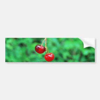 Hanging by a Thread Bumper Sticker