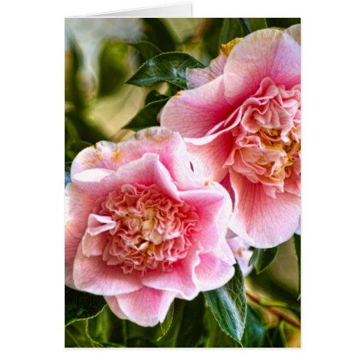 Hanging Camellias Cards