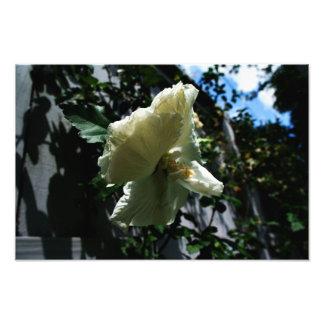 Hanging Flower Photograph