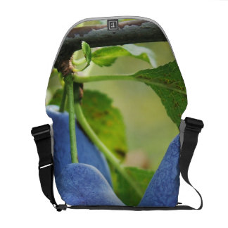 Hanging Fruit Courier Bags