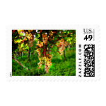 Hanging Grapes on the Vines Postage