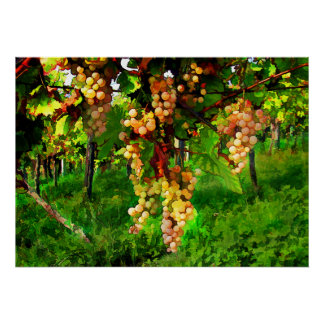 Hanging Grapes on the Vines Print
