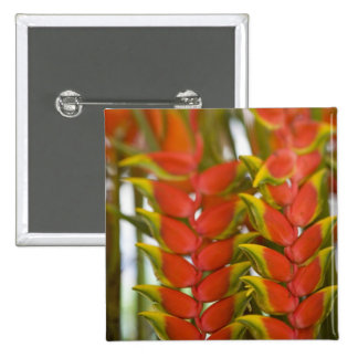 Hanging Heliconia, Weekly Tuesday fruit & Pins