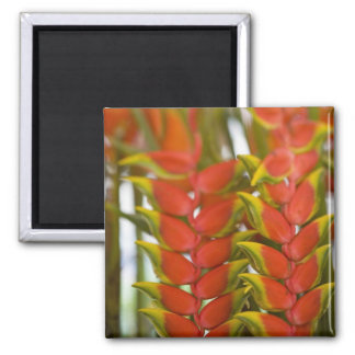 Hanging Heliconia, Weekly Tuesday fruit & 2 Inch Square Magnet