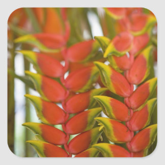 Hanging Heliconia, Weekly Tuesday fruit & Square Sticker