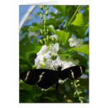 Hanging Heliconius Notecards Greeting Card