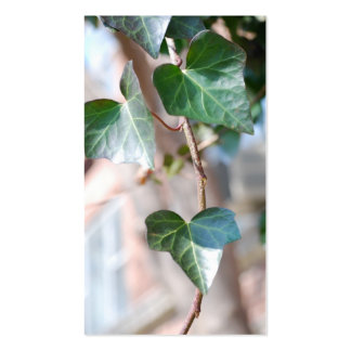 Hanging Ivy [Business] Business Card