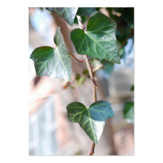 Hanging Ivy [Chubby] Large Business Card
