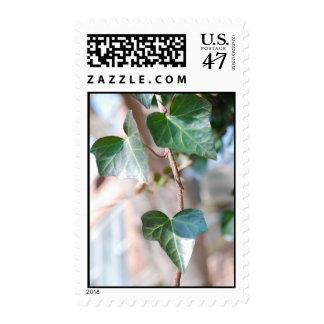 Hanging Ivy - Stamp