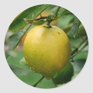 Hanging Lemon Stickers