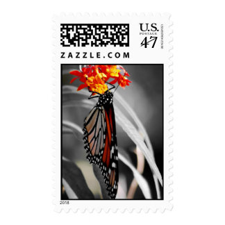 Hanging Monarch butterfly Postage