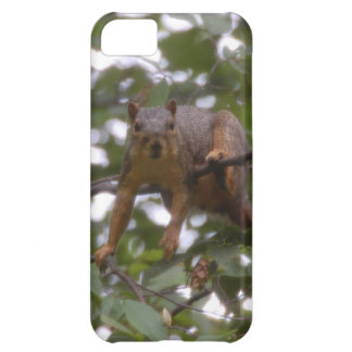Hanging on and peering squirrel iPhone 5C case