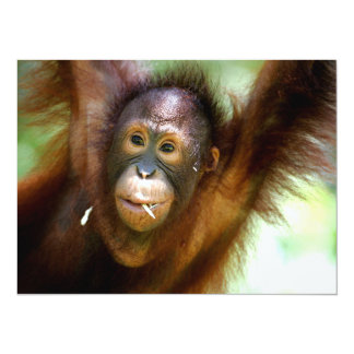Hanging Orangutan Card