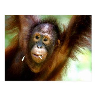 Hanging Orangutan Postcard