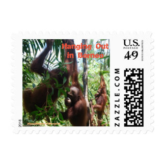 Hanging Out Borneo Jungle Stamp