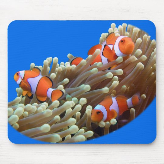 Hanging Out with Clown Fish Mouse Pad