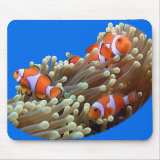 Hanging Out with Clown Fish Mouse Pads