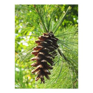 Hanging Pinecone Print Photograph