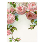 Hanging Pink Roses Post Card