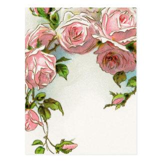 Hanging Pink Roses Postcard