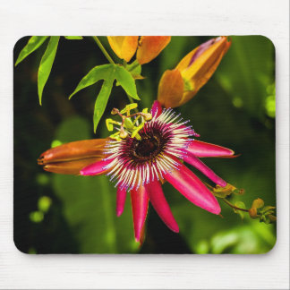 Hanging Red Bromeliad Mouse Pad