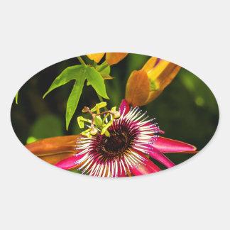 Hanging Red Bromeliad Oval Sticker