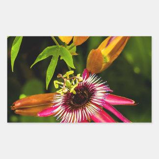 Hanging Red Bromeliad Rectangular Sticker