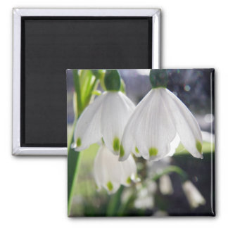 Hanging Snowdrops Magnet