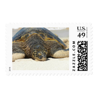 Hanging with the Honu Postage Stamp