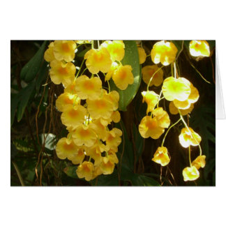 Hanging Yellow Orchids Card