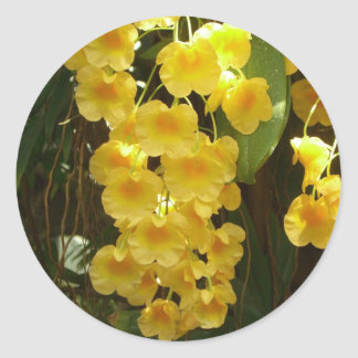 Hanging Yellow Orchids Classic Round Sticker