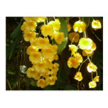 Hanging Yellow Orchids Postcard