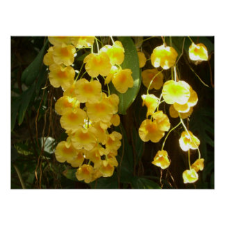 Hanging Yellow Orchids Print