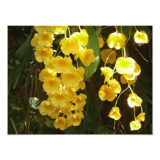 Hanging Yellow Orchids Tropical Flowers Photo Print