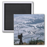 Hani girl carrying basket with rice terrace, refrigerator magnets