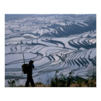 Hani girl carrying basket with rice terrace, poster