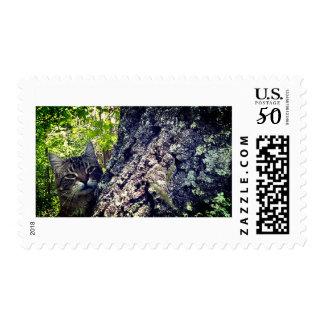 Hank's Oak Tree Postage Stamp