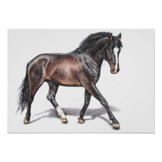 Hanoverian - Warmblood Horse Poster